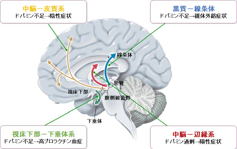 抗精神病薬の作用とドパミンへの影響について図にしてまとめました。