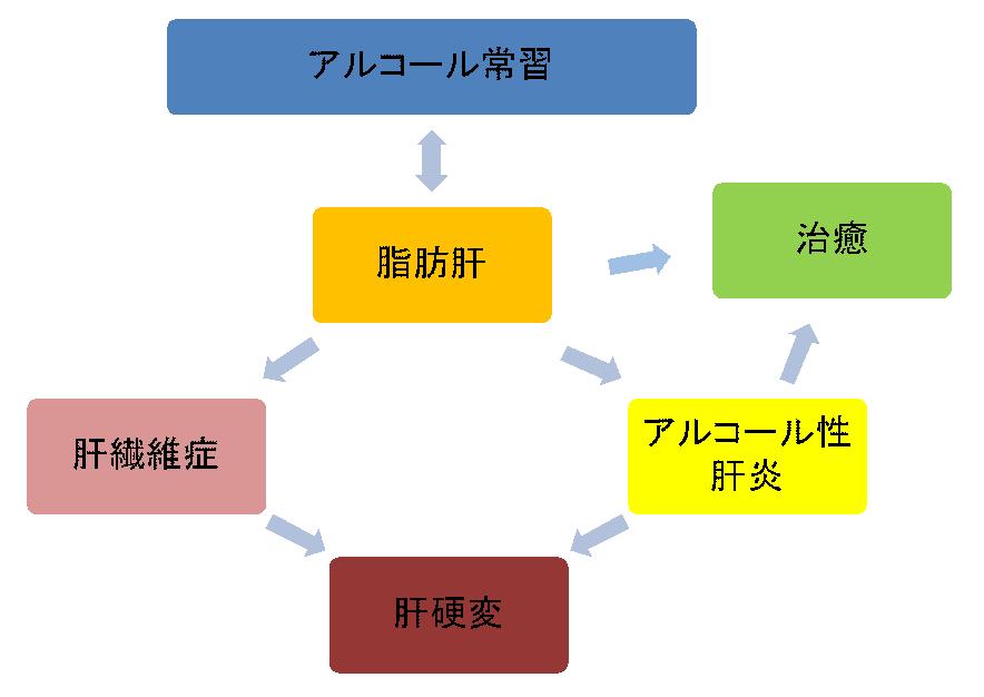 アルコールの肝臓への影響や病気の関係性を図にしました。
